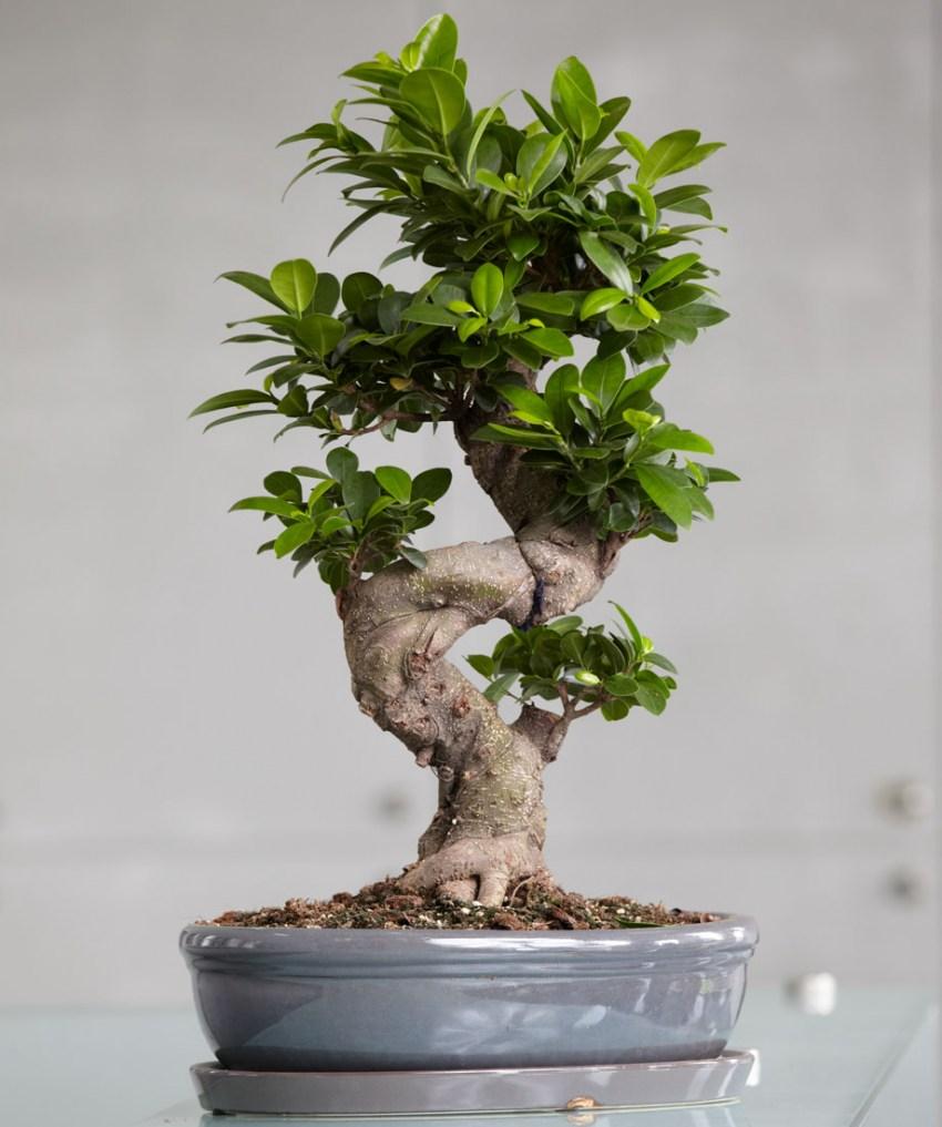 Цветок в виде дерева фото