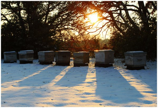 keeping your hives safe when wintering bees