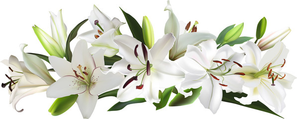 isolated white large lily flowers stripe
